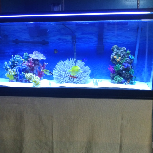 13 best saltwater aquariums images on pinterest for Best water for fish tank