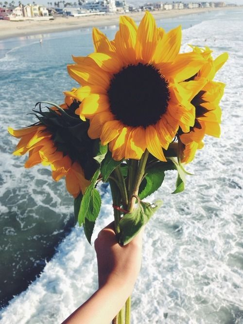 Summer sunflowers. Wow, I'm in love with this picture.