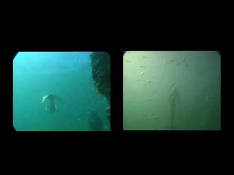 Las Sirenas Existen. Mira Este Video Que Lo Comprueba. ¡SORPRENDENTE! | Comunicaty.com