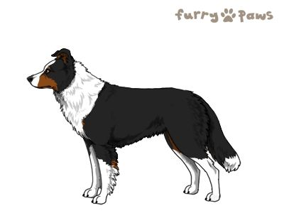 Furry Paws // WCH Kip's Dirt Bag [1.618] *BoB*'s Kennel