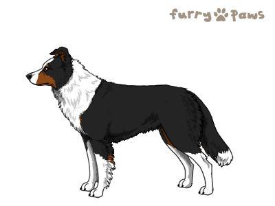 Furry Paws // JPnH Kip's Miss HK's Kennel