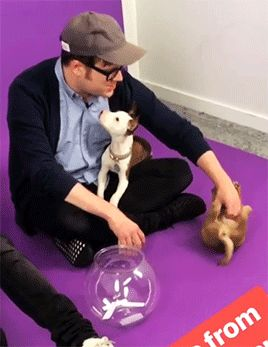 this one is to celebrate 800 followers, here's a Patrick Stump with puppies gif :D