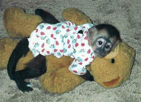 I want a pet monkey so bad!!