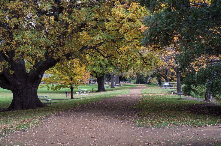 The autumn walk New Norfolk