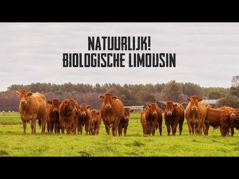 Biologisch BBQ pakket » Koop een Koe