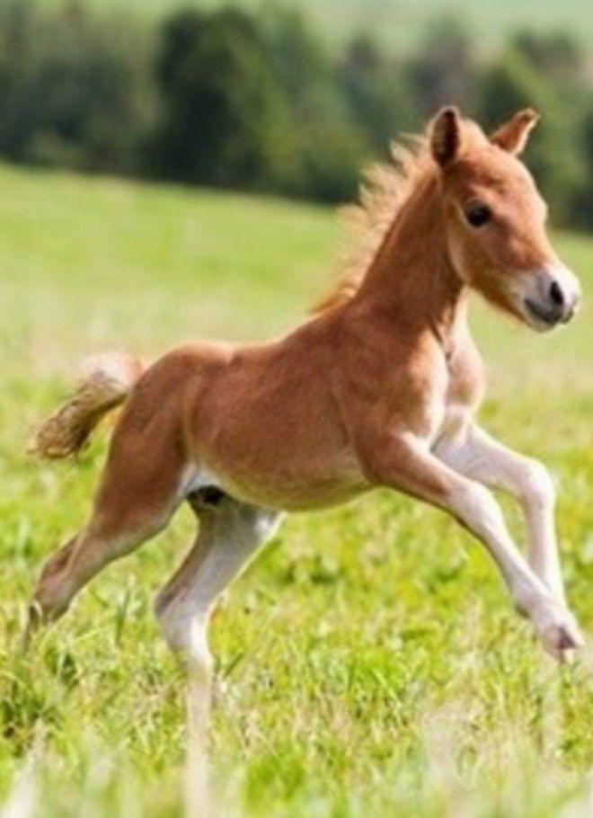 Pony so happy it's skipping!