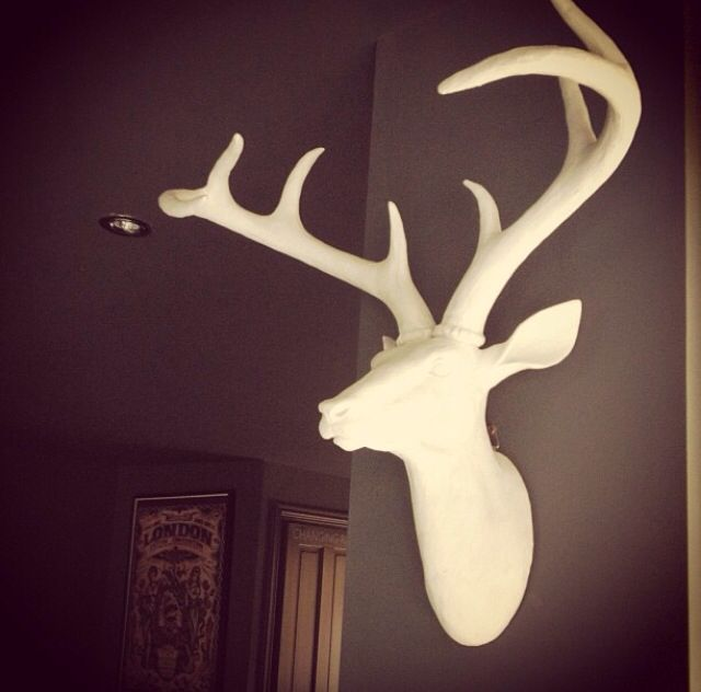 Best Yo It S A Stag Images On Pinterest Antlers Deer