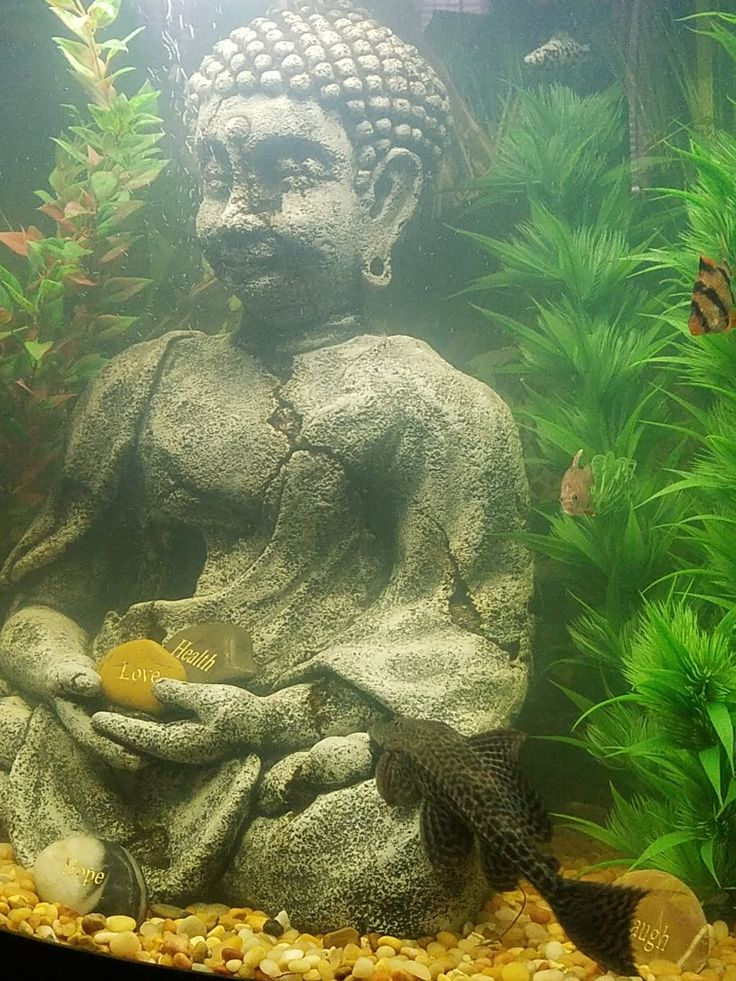 788 best images about fresh salt water fish bowl tanks for Buddha fish tank