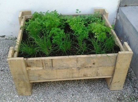 Pallet Herbs Planter | 1001 Pallets | 1001 Pallets ideas ! | Scoop.it