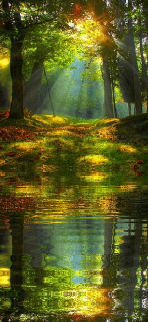 Forest Sunrise Reflection