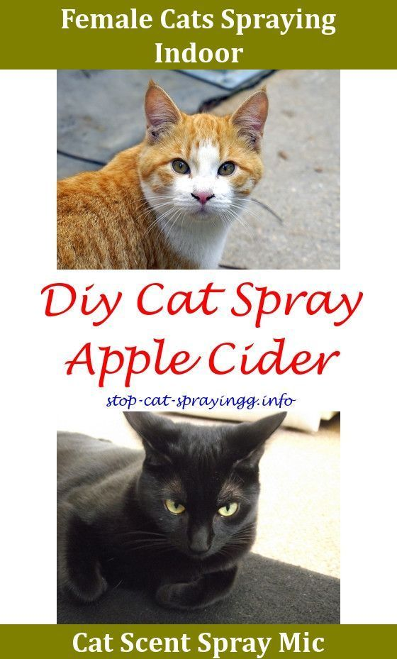 Can U Spray Perfume On A Cat,cat spray pictures carpet spray for fleas ok