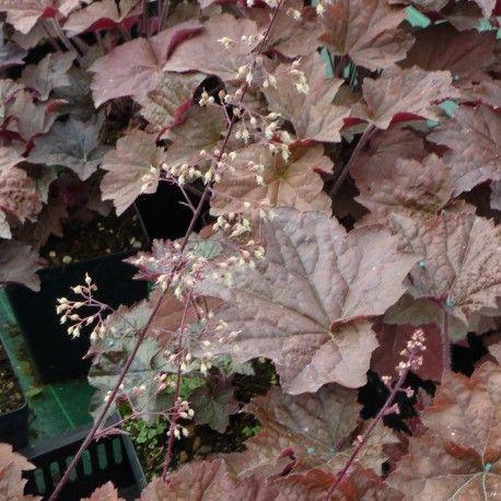 45 migliori immagini piante perenni fiorite e foglie - Piante fiorite ...