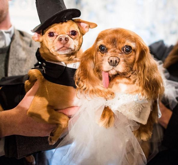 Instagram Dogs Toast And Finn Got Married, And It Was Adorable - SELF