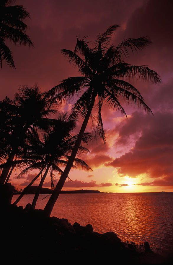 Tumon Bay, U.S. Territory of Guam, South Pacific / sunset near the ocean & palms