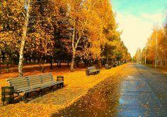 autumn desktop wallpapers 344