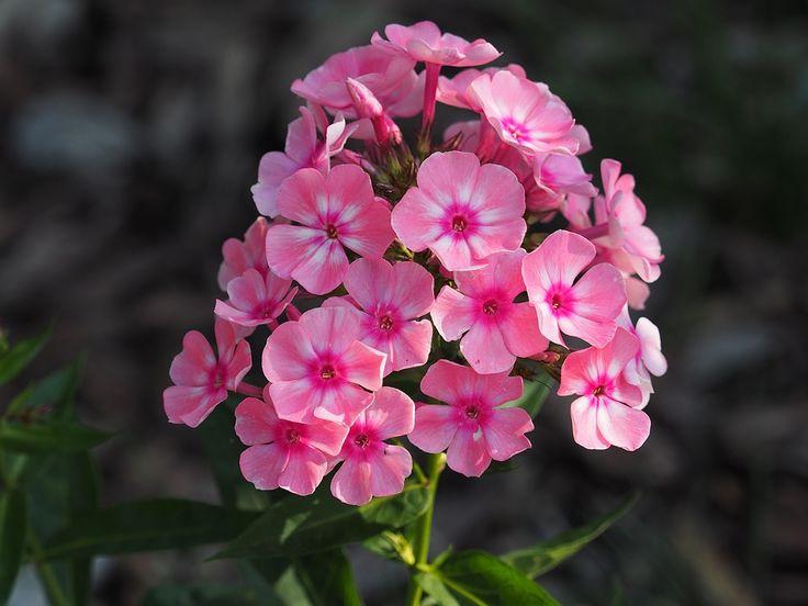 flower-1532696_960_720.jpg (960×720)