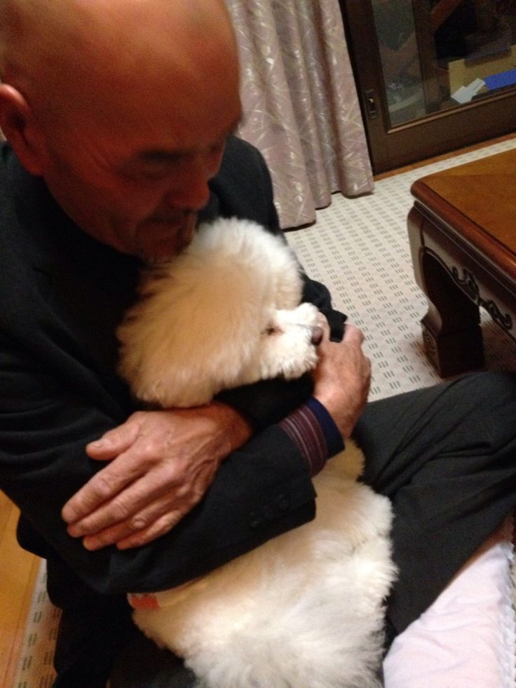 Sweeeet!! #poodle #barboncino #Anji