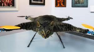 een opgezette kat