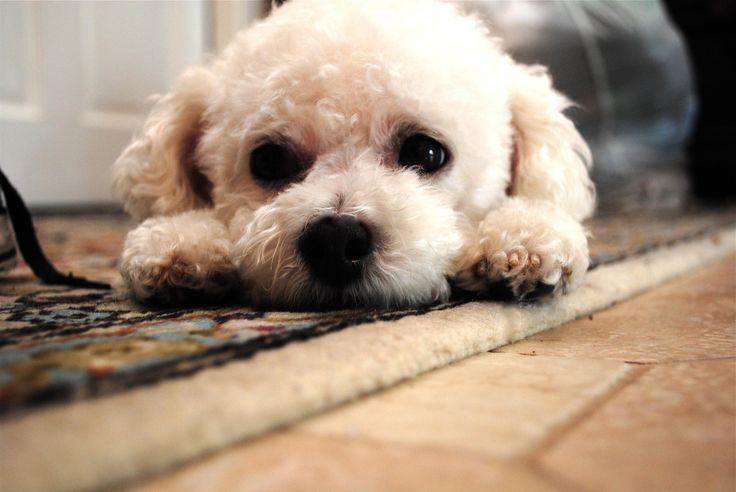 188 Best Dog Stuff images | Animal tattoos, Mini tattoos