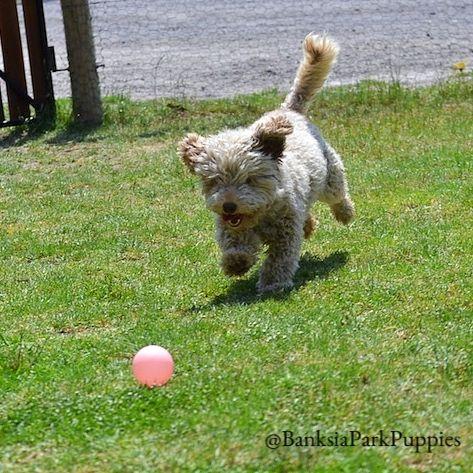 Fooseball has found a ball!!! 😀🐾
