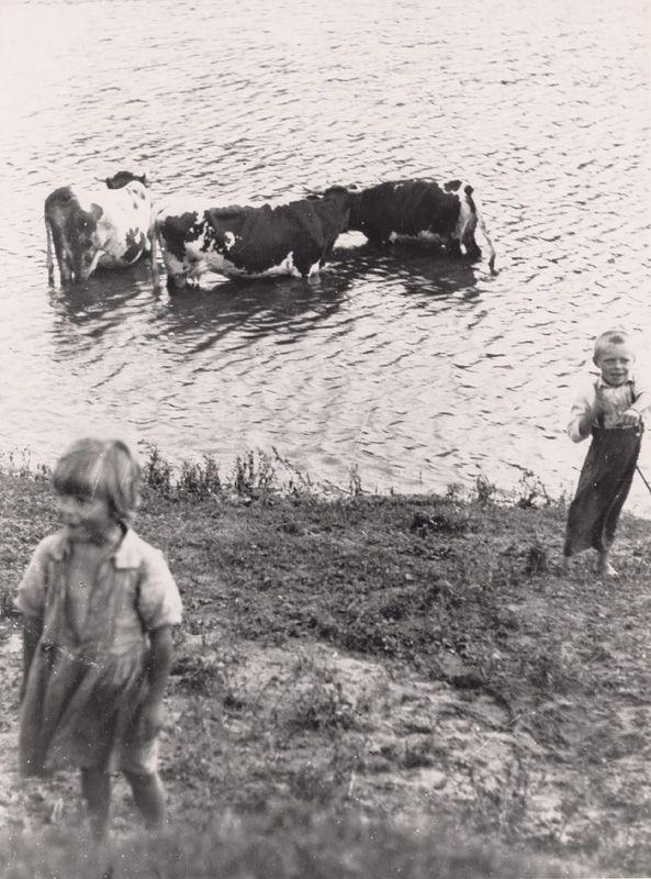 Irena Blühová - Pastierik kráv