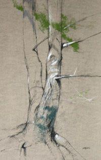 Northgate AP Summer Blog: (Drawing) Tree Drawings
