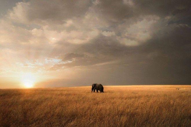 Masai Mara, Rift Valley, Kenya   1,000,000 Places