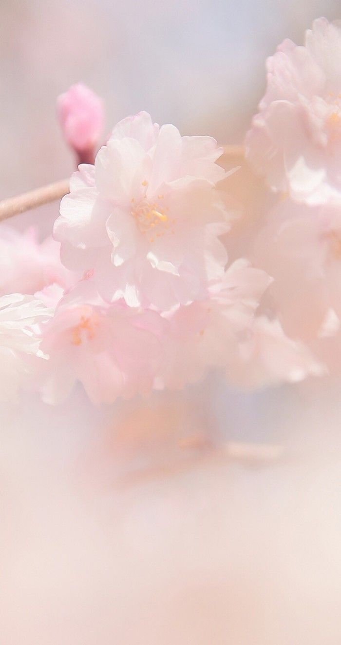 pink. #flowers.