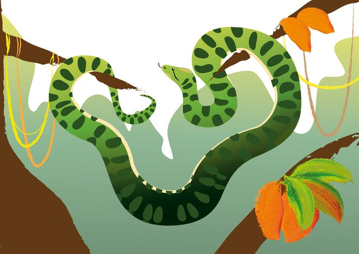"Anaconda of the French Guyane by Joliet82.deviantart.com on @deviantART Illustration from ""Wapatou et les chercheurs d'or"" published by Editions Adabam"