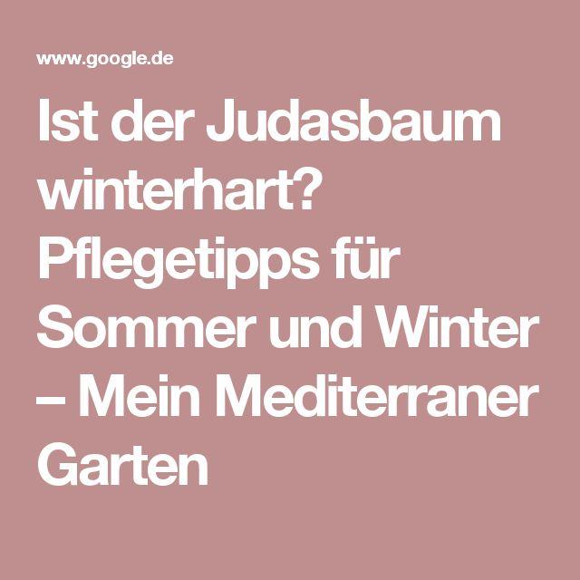 Ist der Judasbaum winterhart? Pflegetipps für Sommer und Winter – Mein Mediterraner Garten