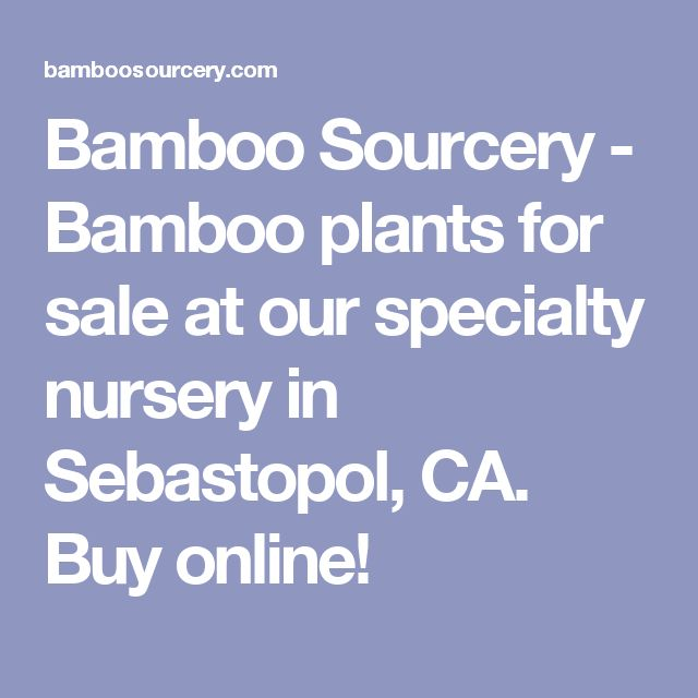 Bamboo Sourcery - Bamboo plants for sale at our specialty nursery in Sebastopol, CA.  Buy online!