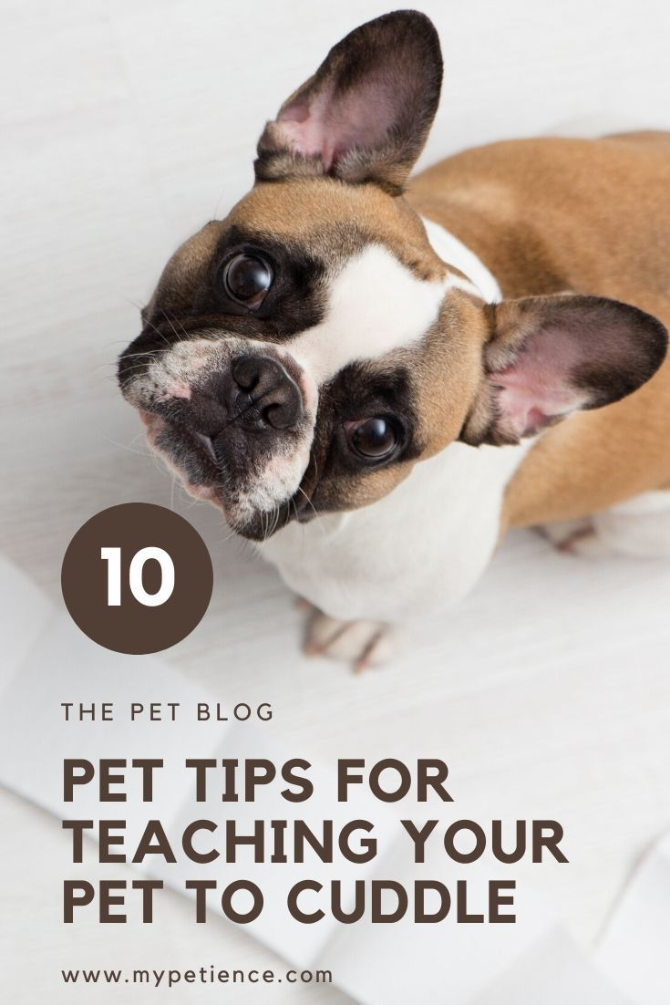 The Best Small Pets For Cuddling Teaching A Pet To Cuddle In