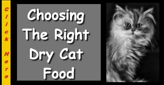 Choosing the wrong dry cat food can have lasting consequences for your kitty's health. For instance, the type of food you choose now will determine your pet's health when they are older.
