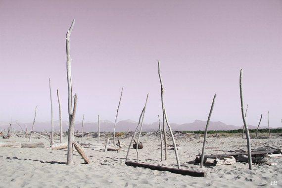 #alberi #nudi sulla #spiaggia foto artistica stampa di di lauracorre