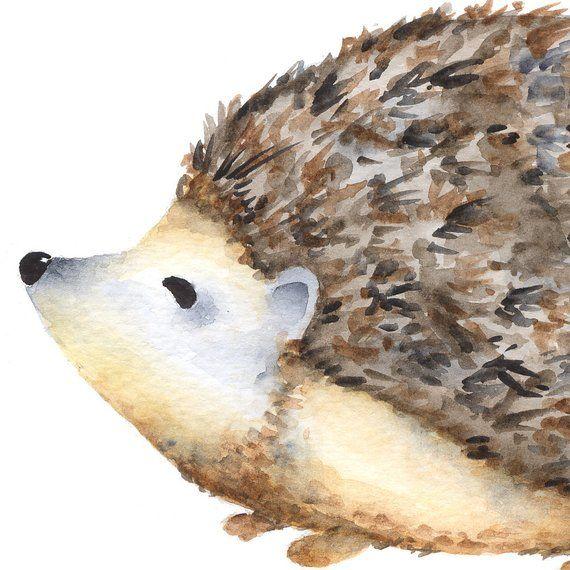 40+ Woodland Animal Porcupine Clipart