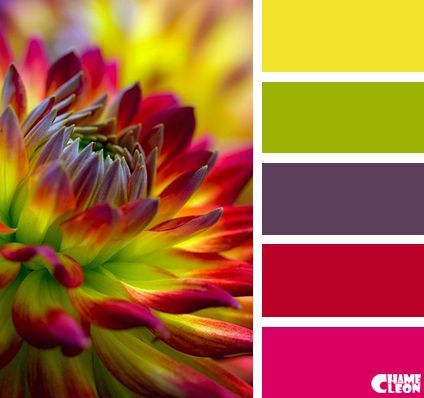 Flower colours for living room cushions.
