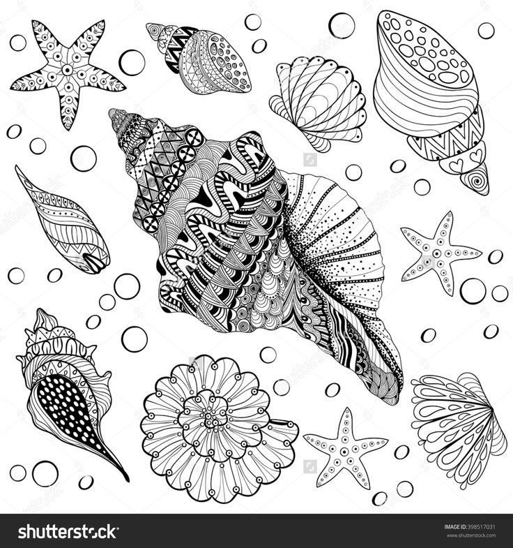 276 best drawing shells images on Pinterest Coloring books