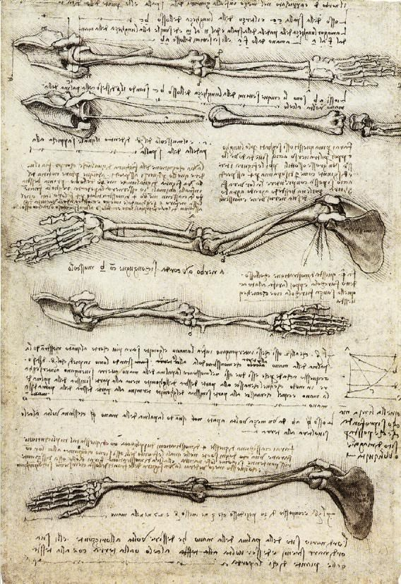 Studies of the Arm showing the Movements made by the Biceps - Leonardo da Vinci – Wikipédia, a enciclopédia livre