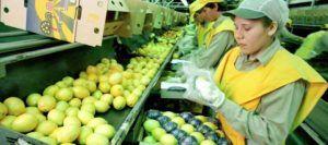 Limones argentinos finalmente podrán entrar a EUA