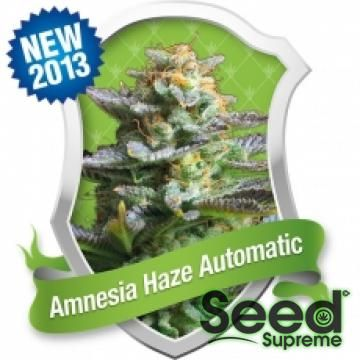 The #Amnesia #Haze automatic is the result of many years of breeding. The #Sativa strains like original Amnesia takes 12-20 weeks to grow offering euphoric high and spicy sweet taste with smaller height and reduced growth time. This dominant auto flowering strain gives generous yields of high quality hazy buds. The Amnesia Haze Automatic is the perfect auto flowering variety for lovers of the Haze. http://www.seedsupreme.com/amnesia-haze-automatic-feminised-seeds.html