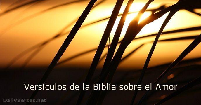 Versículos de la Biblia sobre Amor: El amor es paciente, es bondadoso. El amor no es envidioso ni jactancioso ni orgulloso. No se comporta con rudeza, no es egoísta, no se enoja fácilmente, no guarda rencor.