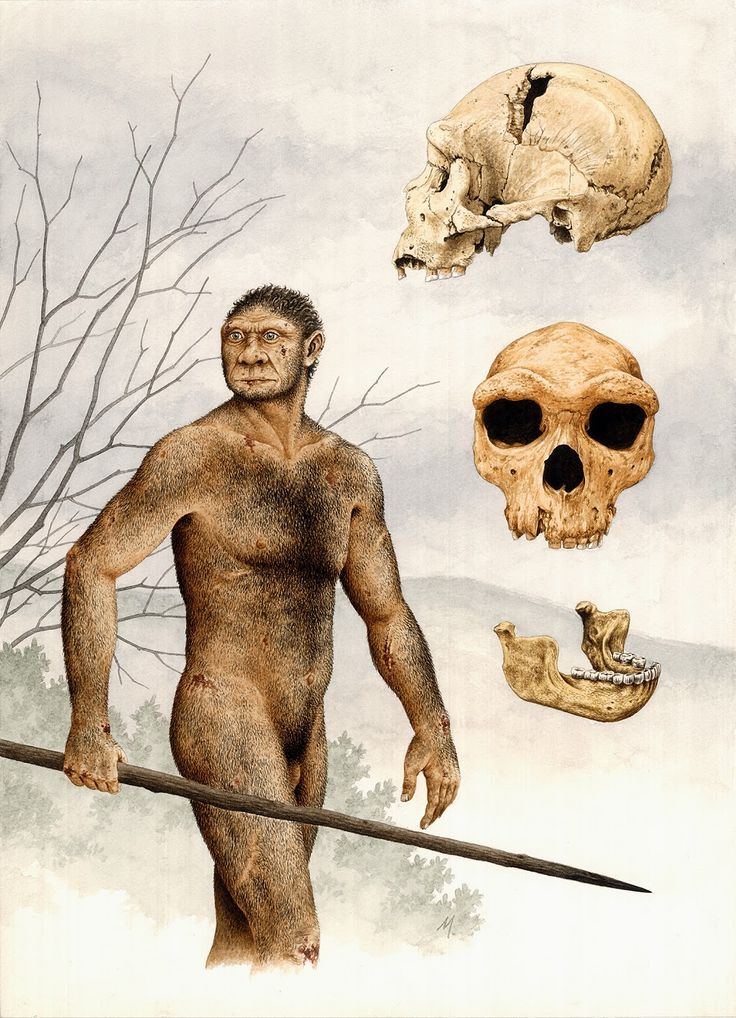 Homo heidelbergensis by Marcos Oliveira, 2006