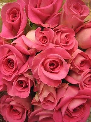 wowBeautiful Flower, Rose Flowers, Rose Fleur, Pink Roses Soooo, Pretty Pink, Colors, Roses Soooo Pretty, Beautiful Pink, Flowers