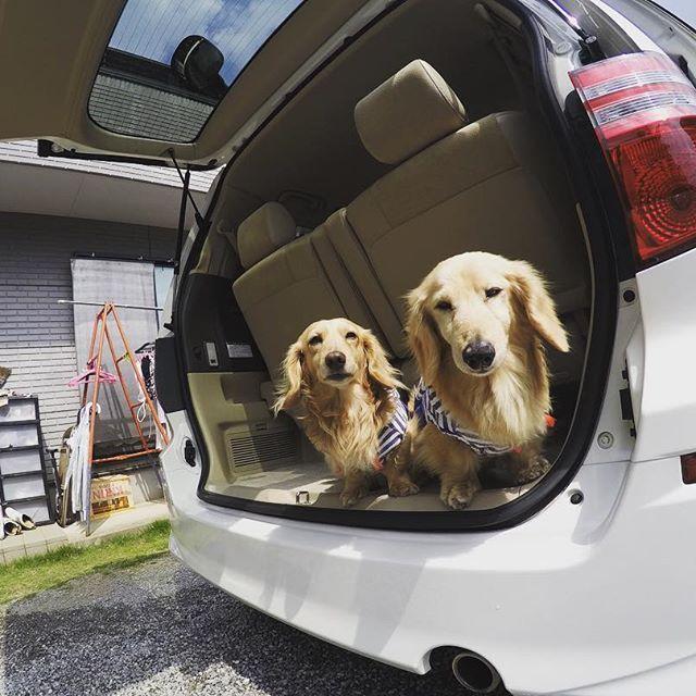#アルファード #洗車 #洗車日和 #タイヤ交換#愛犬#ラッキー#ちび#ゴープロのある生活