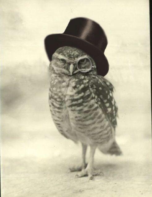 Owl too hat  tattoo idea