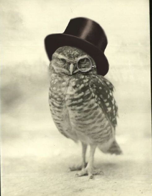 Owl too hat  tattoo idea