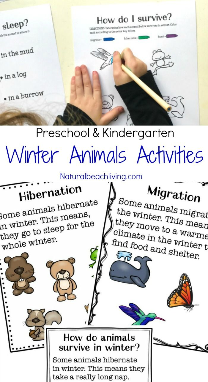 Free printable coloring pages hibernating animals - You Ll Love These Winter Animals For Preschool Ideas