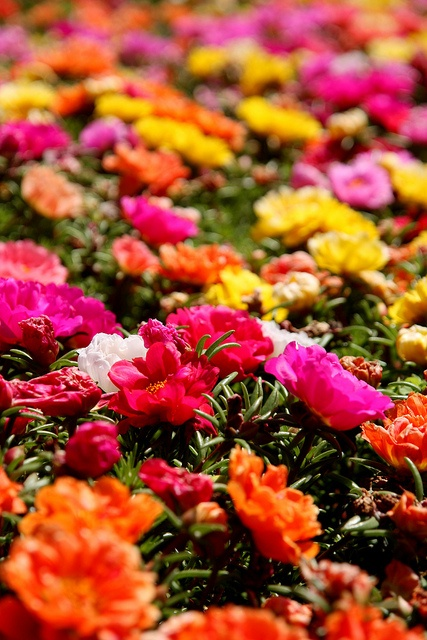beautiful hot oranges and pinks..love this color combo in flowers #MallyTrends