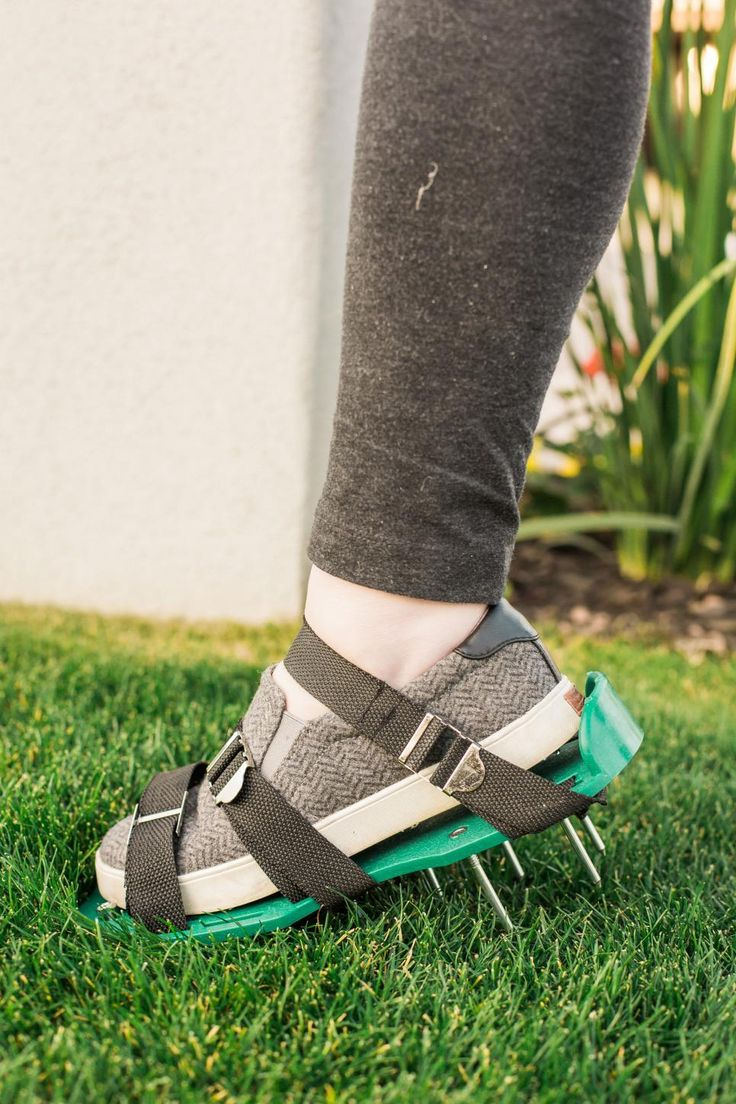 Get our spring to-do list for maintaining a lush, healthy lawn year-round.