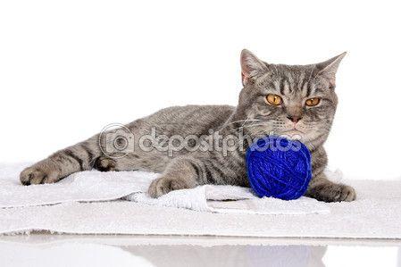 Британский котенок смешные белые, изолированных, сон — Стоковое фото © kulkann #119424266